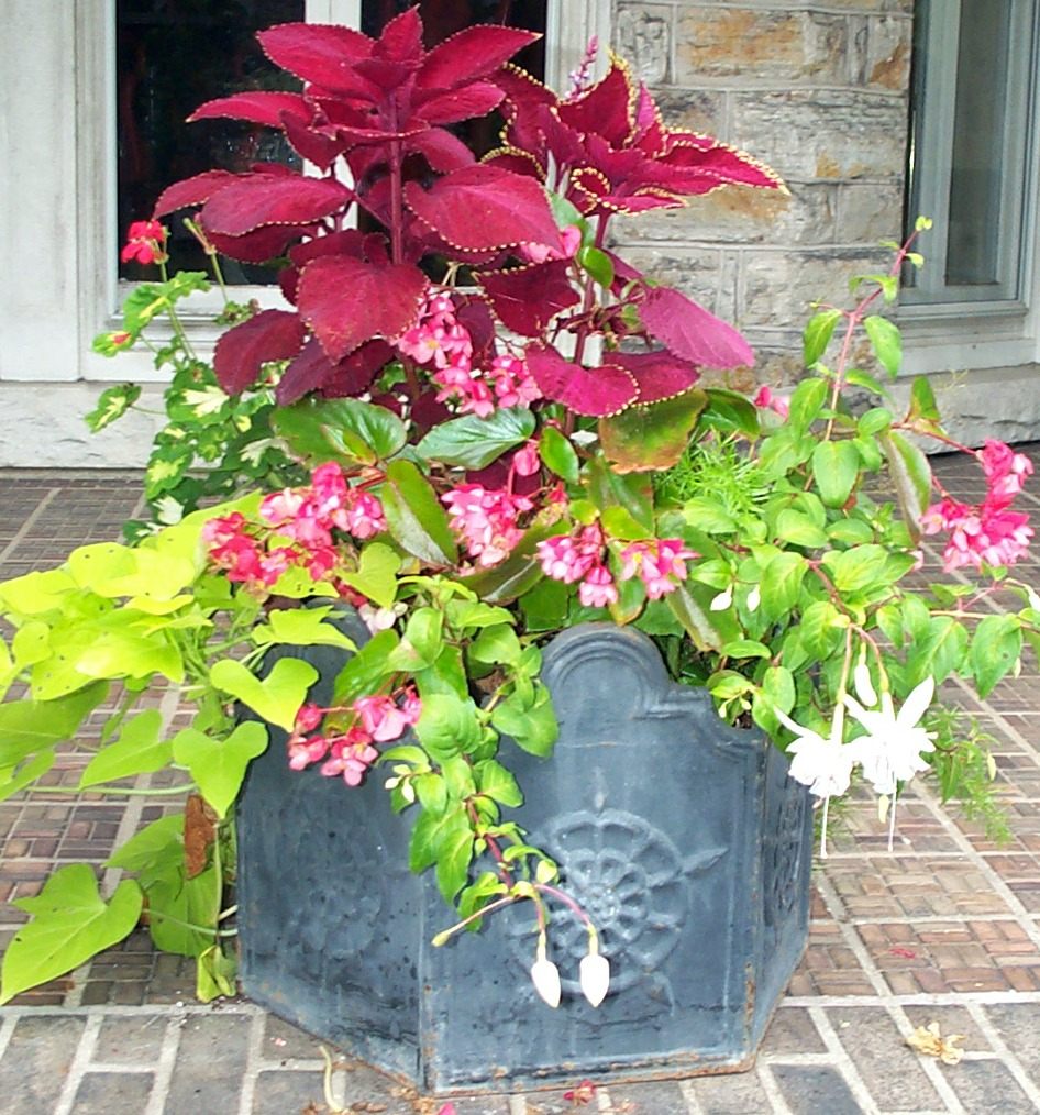 Partial shade container in old fashioned lead pot