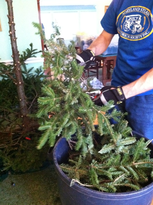 Chopping off branches of our Christmas Fraser Fir