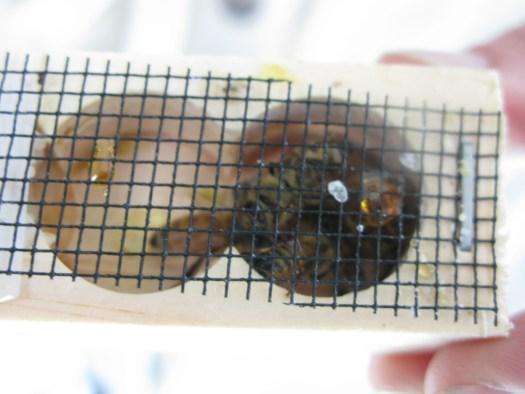 Queen in queen cage