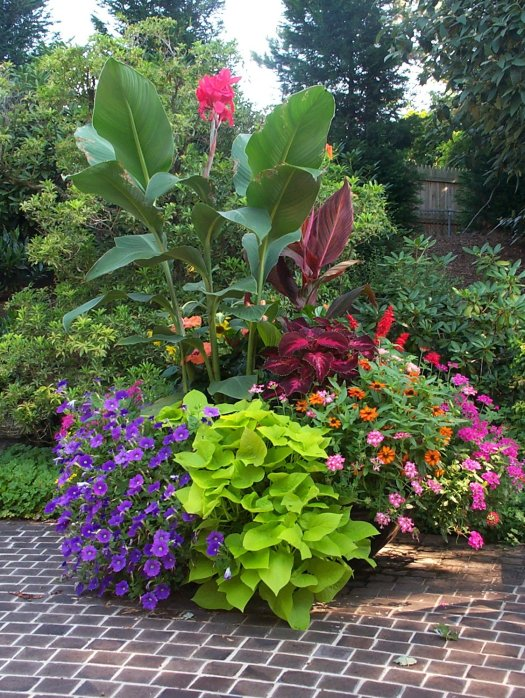 Strong textural cannas give this container visual impact
