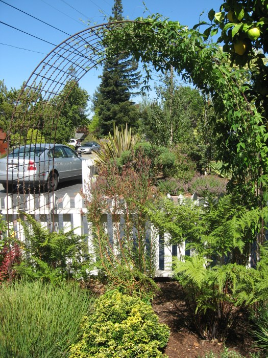 Another vertical element was the use of cattle fence as an arbor, a low cost solution to growing vines in a small space
