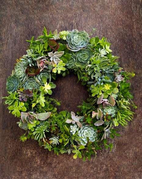 Beautiful living succulent wreath