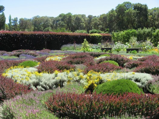 The larger knot gardens at Filoli, You can see the beautiful Copper Beech hedge in the distance