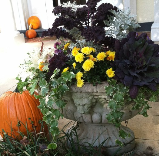 Fall container with kale, cabbage, mums, ivy, and dusty miller- courtesy of Leigh Barnes of Companion Plantings