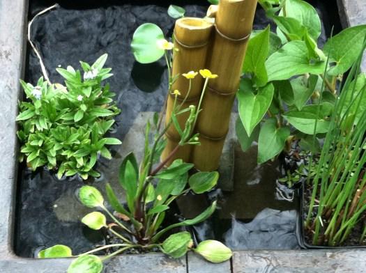 Water plants in fountain water