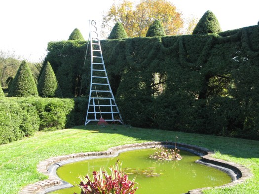 Pruning the hedges at Ladew Topiary gardens