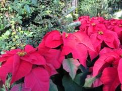 Longwood Christmas 2013 090