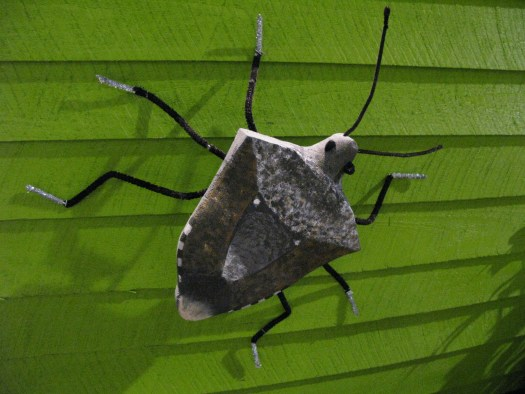 Stink Bugs are here to stay