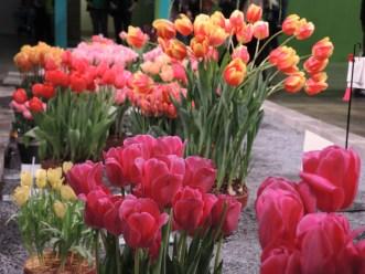 Philadelphia flower show 2014 162