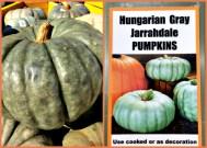Hungarian Grey Pumpkin