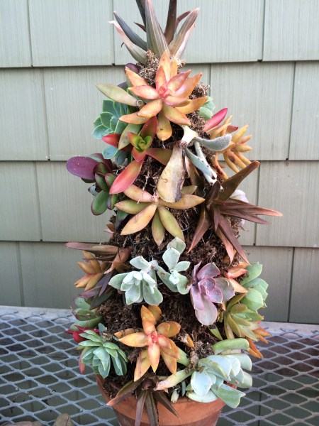 Succulent tree finished with cuttings ready to fill in for the summer