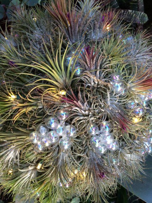 Christmas Succulent Decor.Deck The Halls A Succulent Christmas The Garden Diaries