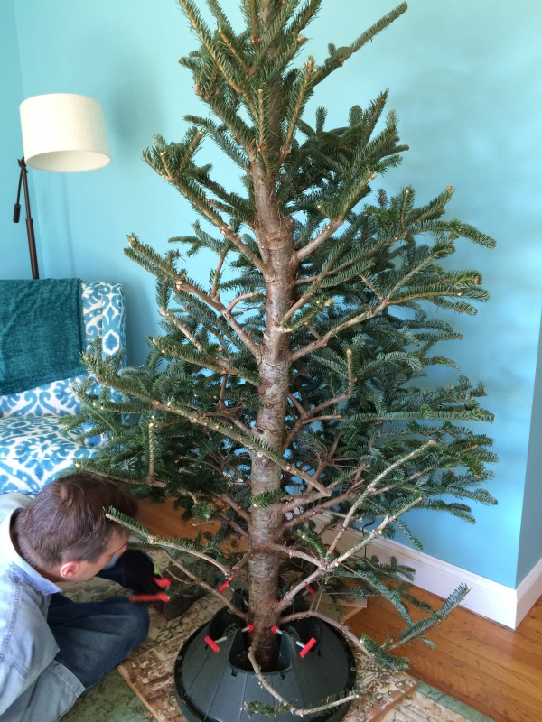 pruning the branches off to make a bottle tree 096 - Old Christmas Tree