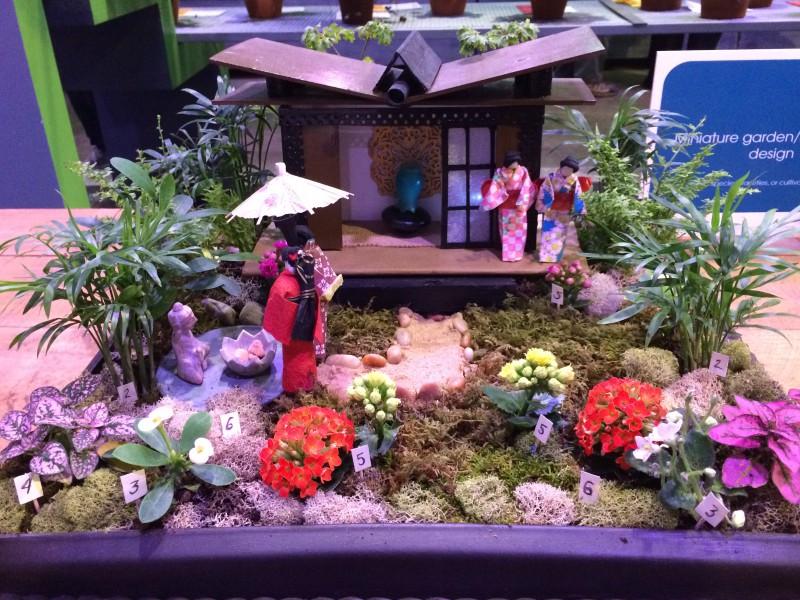Mini Gardens The Garden Diaries