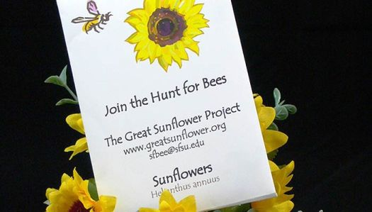 sunflowerproject-seeds-mountain-1