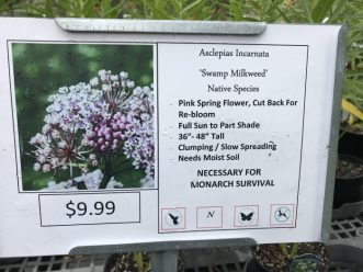 Sign at nursery for Swamp Milkweed