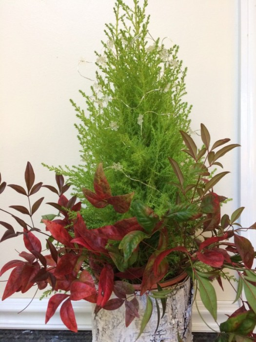 Cypress with nandina