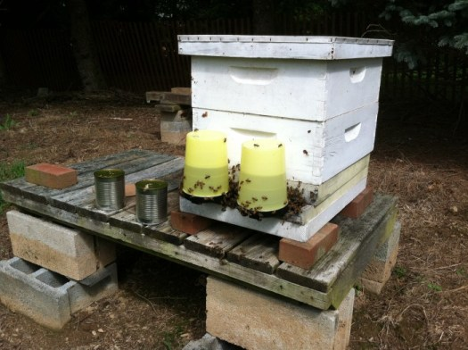 Feeders dispensing sugar water at hive entrance for hungry bees