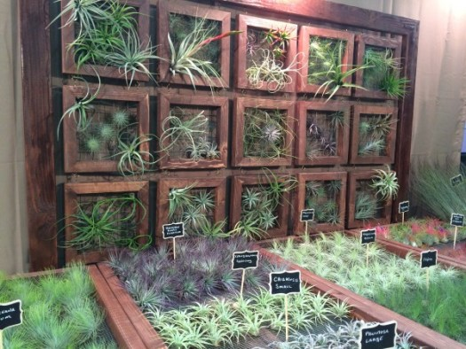 Air plant display at a recent trade show