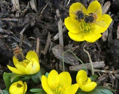 Bees bathe in the pollen