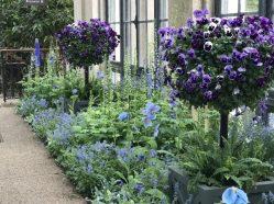 The winter Blues Festival is all about blue flowers at Longwood until March 25