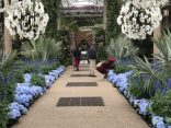 Blue hydrangeas and white orchid balls decorate the conservatory at Longwood Gardens