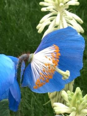 One last petal hanging on
