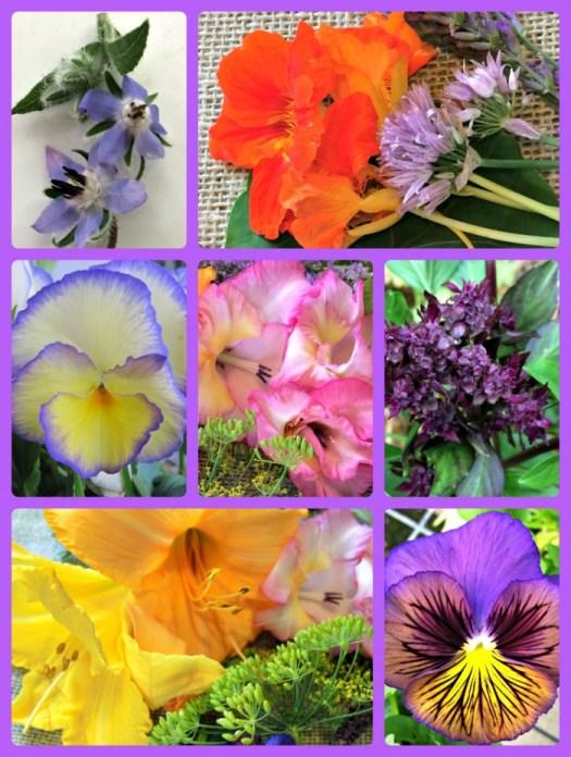 An array of edible flowers
