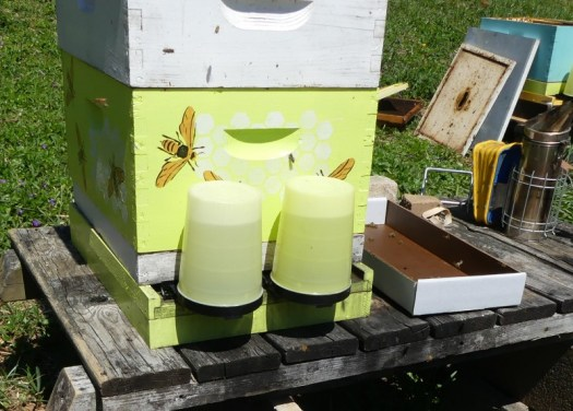 I feed my hives with sugar water in entrance feeders