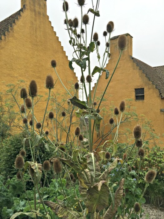 Culross Palace in Scotland is the location of Claire's Outlander herb garden; here Teasels are shown
