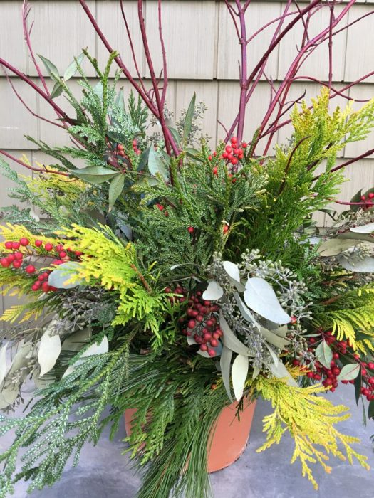 Outdoor arrangement with golden arborvitae, red twig dogwood, seeded eucalyptus, nandina berries, and thujopsis