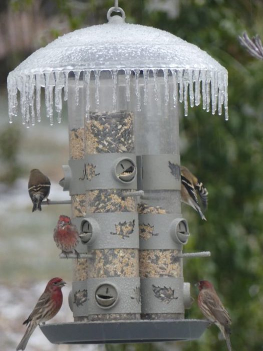 Bird feeding in winter
