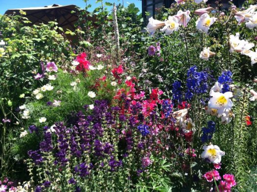 Annie's Annuals is a nursery that specializes in Heirloom annuals; this is one of their demo gardens