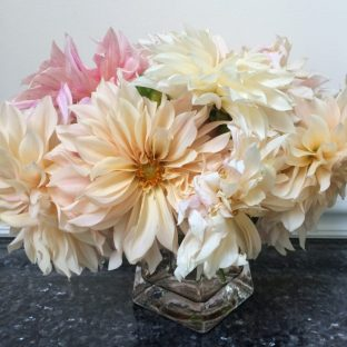Cafe au Lait dahlia flowers are in shades of cream, pink, and tan