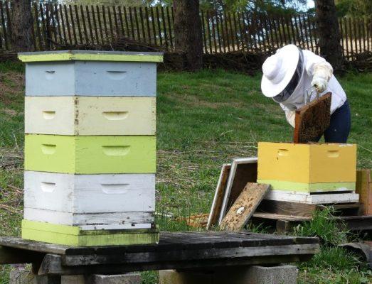 Beehive Art Keeping Backyard Bees