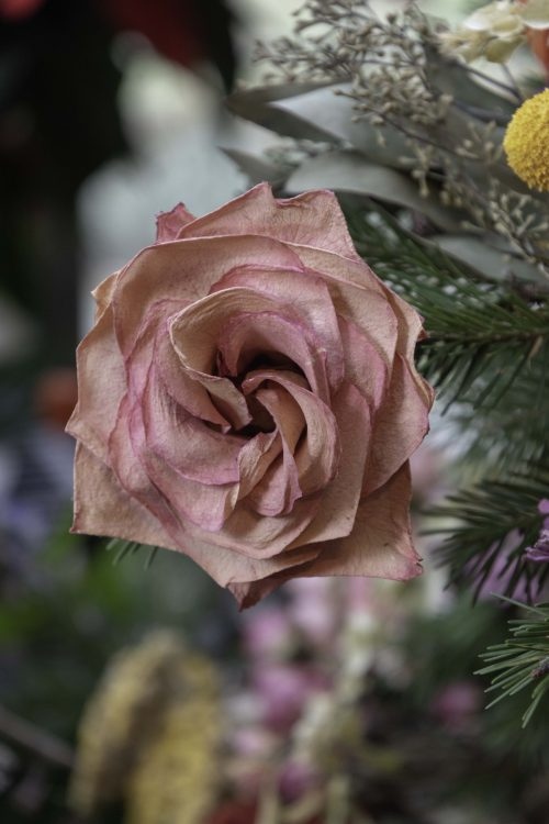 A single rose hangs from the tree