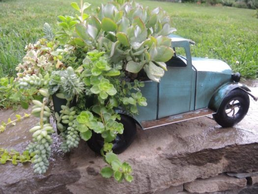 Succulents planted in truck