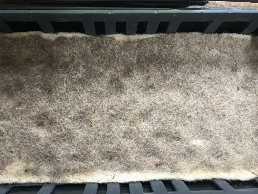 Saturated jute pad ready to be planted with microgreens
