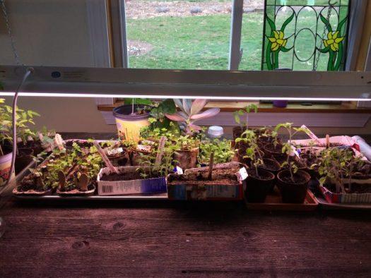 I start my seeds in February