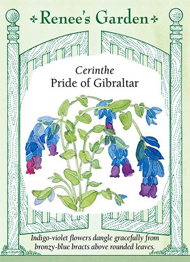 Cerinthe available at Renees Seeds