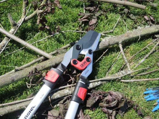 Prune shrubs before leafing out