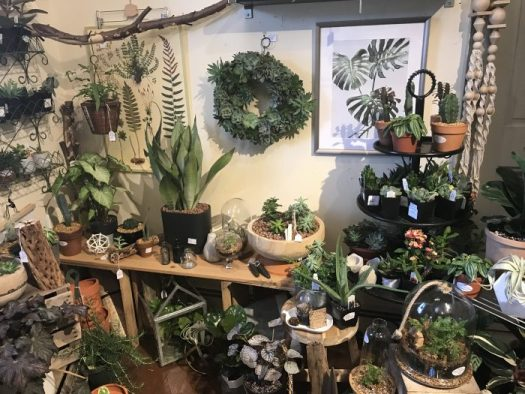 All kinds of houseplants, from succulents to ferns to tropicals, are decorating indoor spaces