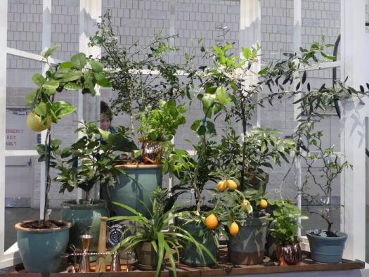 A bay window of houseplants stage at the Philadelphia Flower Show