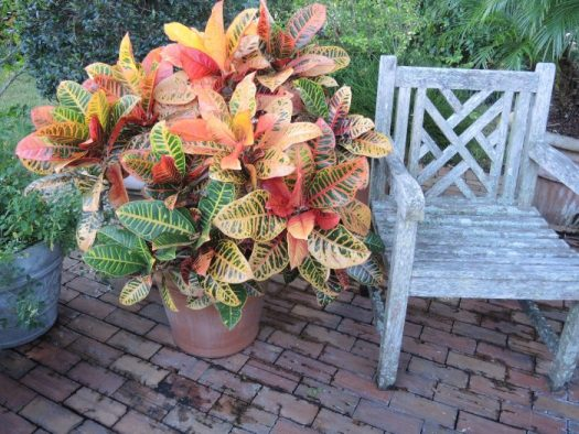 The signature plant used here is Croton and that is all you need