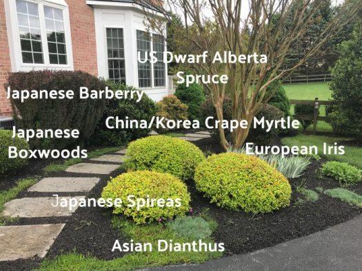 Non-native plants