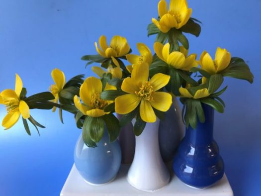 Bring the little blooms in to brighten your home and they are extremely fragrant!e
