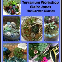 Terrarium DIY-Scenes Under Glass