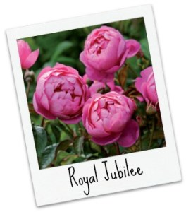 royal_jubilee_pol