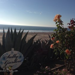 """Sally"" is a very lucky girl, her beautiful rose garden is also her entrance to the ocean."