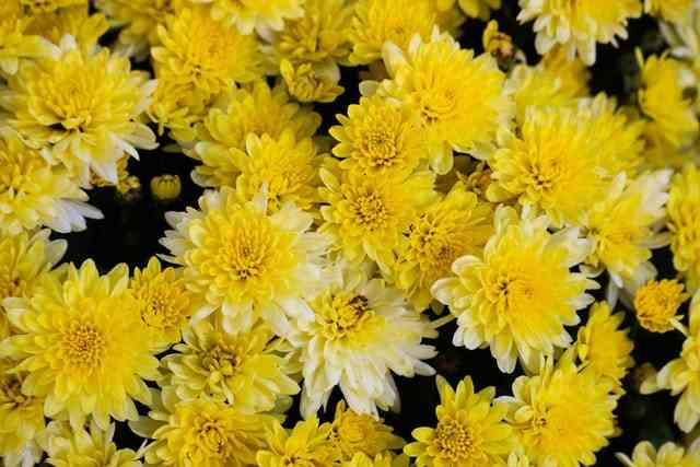 10 Vegetation with Yellow Flowers